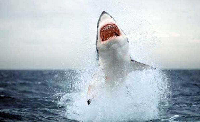 Australian Beaches Closed after Shark Attack